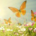 attracting butterflies to garden