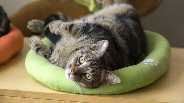 choosing cat bed