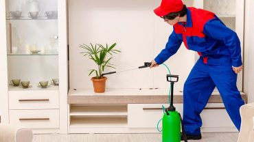 control pests at home