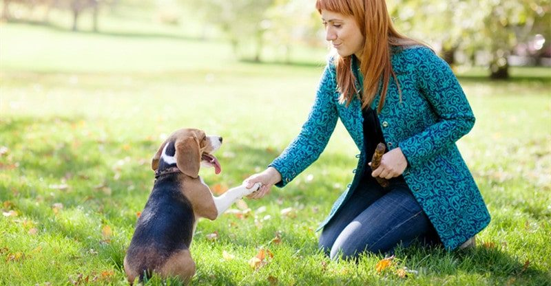 dog breeds easy to train