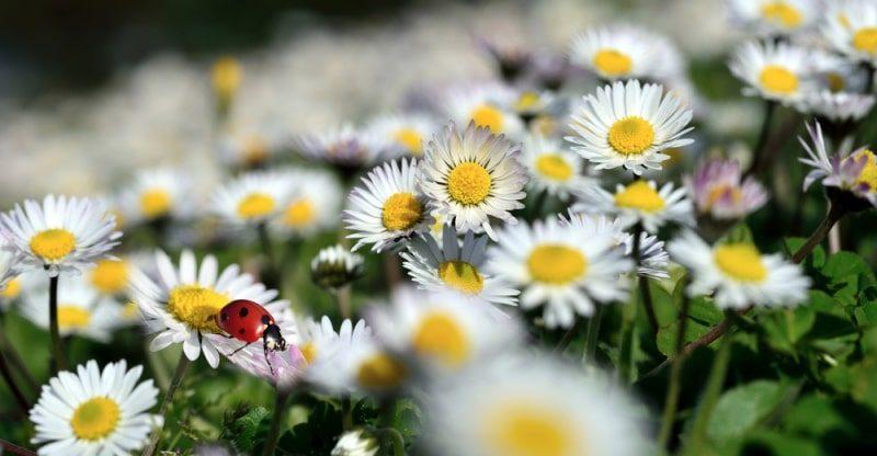 flowers grow in garden