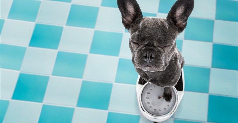 help dog lose weight