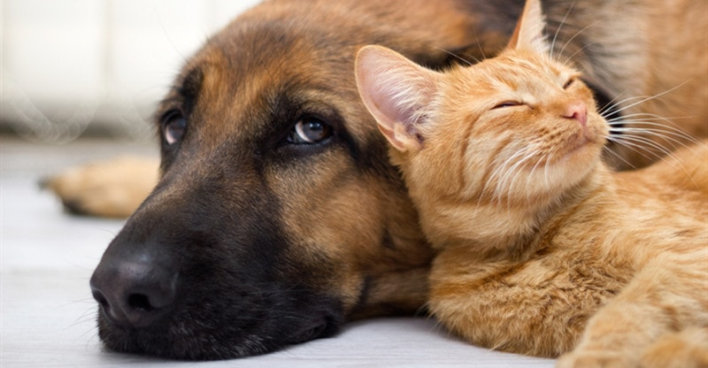 help your pets cope