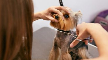 insurance for pet groomers