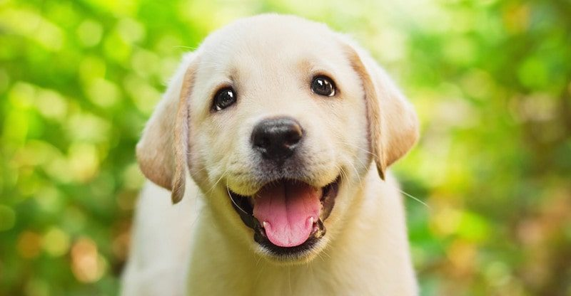 is it safe to use castor oil for dogs
