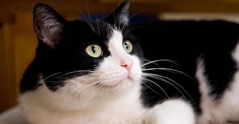 make cat happier and healthier