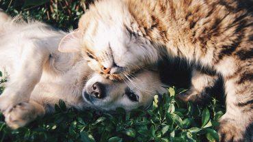 pet insurance comparison guide