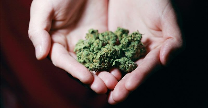 popular cannabis strains
