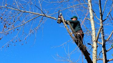 pruning off dead branches