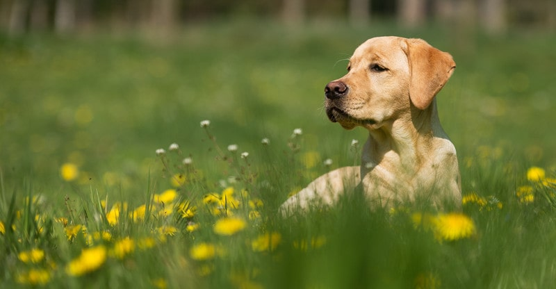 right food for epileptic dog