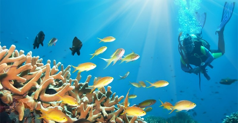 try live aboard diving trip
