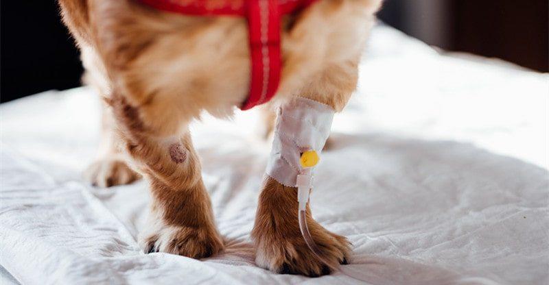 unexpected veterinary bills