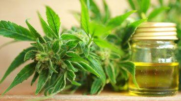 using cbd oil