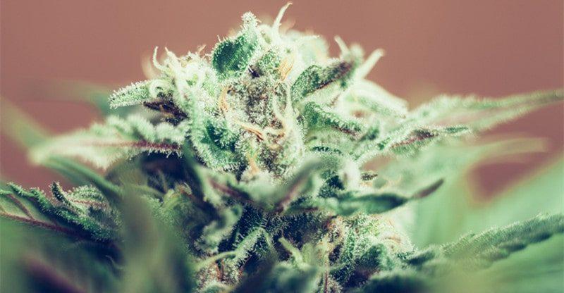 ways to use cannabis